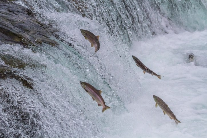 Swimming application security upstream with SecDevOps