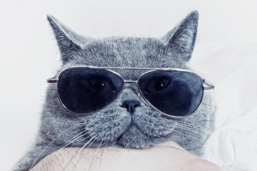 Schrodinger's Cat and Analytics Accessibility
