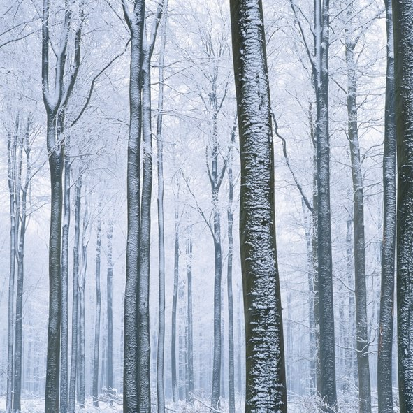Winter is coming...for the storage industry